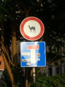 Kom niet op je kameel, Sint!